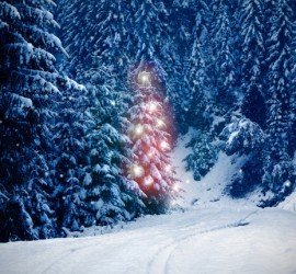 Weihnachten-Geld-sparen_Weihnachtsbaum-e1385734126990